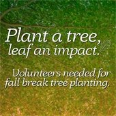 Plant a tree, leaf an impact text over tree leaf canopy