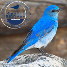 Colorado Bluebird Project 2021