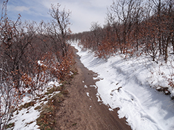 soft surfaced trail with snow